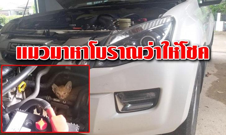 แห่ส่องทะเบียน!!! แมวซ่อนในห้องเครื่องรถกระบะ แมวมาหาโบราณว่าให้โชค